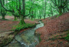 Фото бесплатно Испания, деревья, лес
