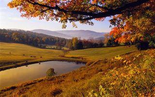 Фото бесплатно осень, даревья, трава, поле, озеро, пастбище, коровы, холмы
