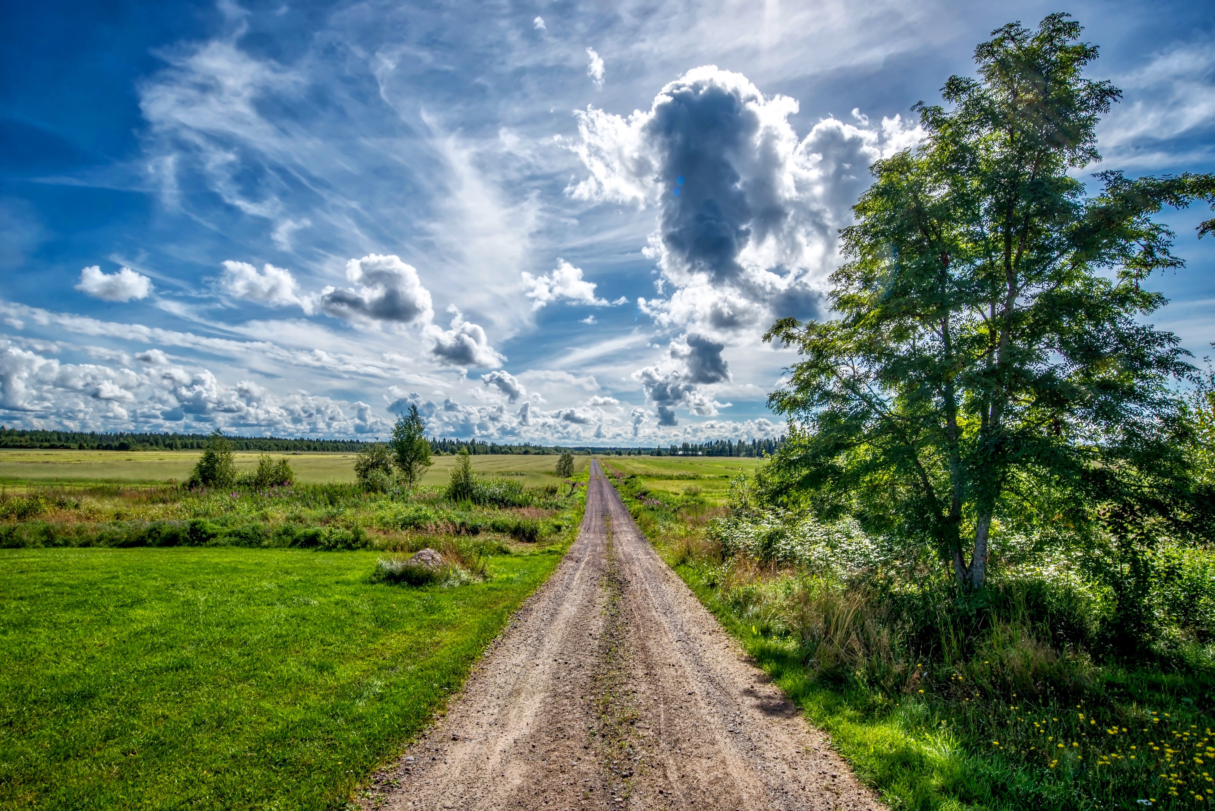 обои поле, деревья, дорога, облака картинки фото