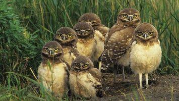 Бесплатные фото совята,глаза,желтые,клювы,перья,лапы,трава