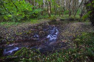 Бесплатные фото лес,деревья,речка,ручей,природа