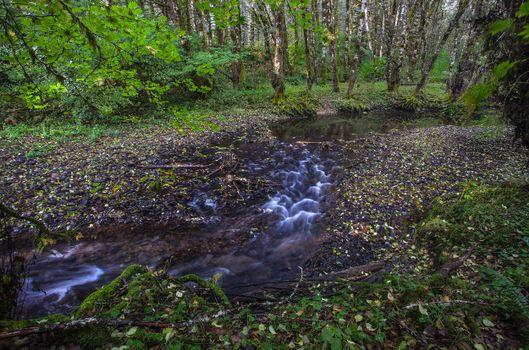 Фото бесплатно лес, деревья, речка, ручей, природа