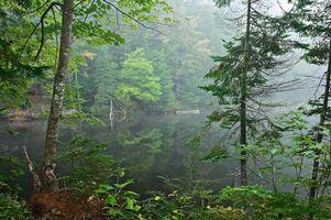 Бесплатные фото озеро, лес, деревья, туман, пейзаж