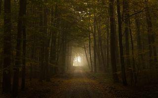 Бесплатные фото темный лес,тропинка,лучи солнца,листья