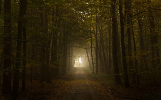 Фото бесплатно темный лес, тропинка, лучи солнца