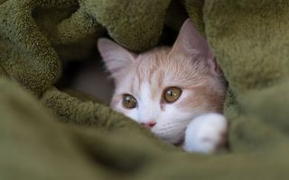 Заставки котенок, зеленое полотенце