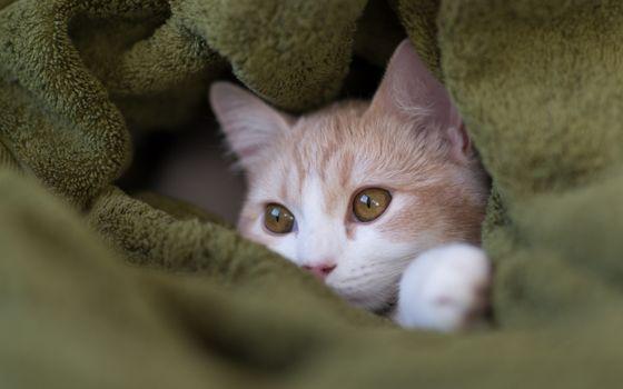 Бесплатные фото котенок,зеленое полотенце