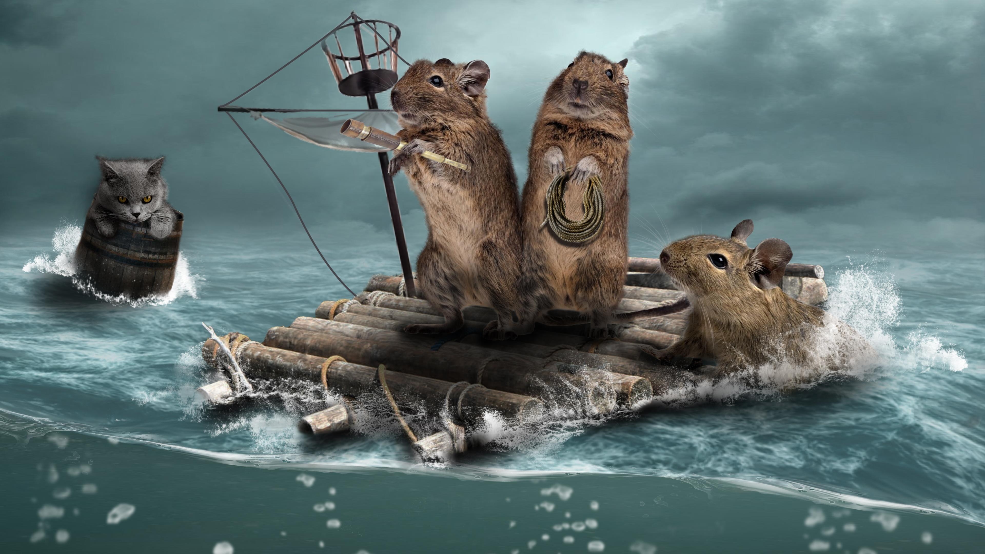 Обои море, плот, крысы, кошка