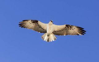 Бесплатные фото парящий орел,небо,крылья,взгляд сверху