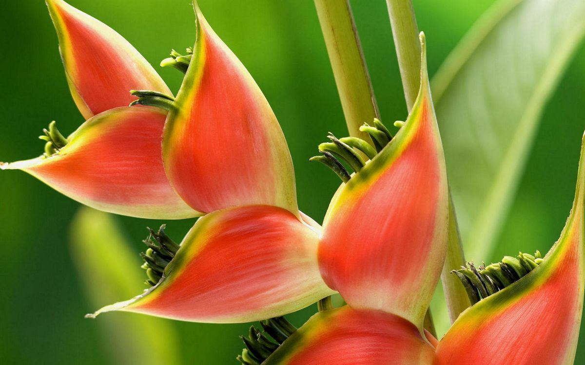 Фото бесплатно растение, красно-зеленое, стебли, листья, усики, природа