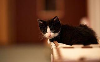 Фото бесплатно котенок, чернр-белый, морда