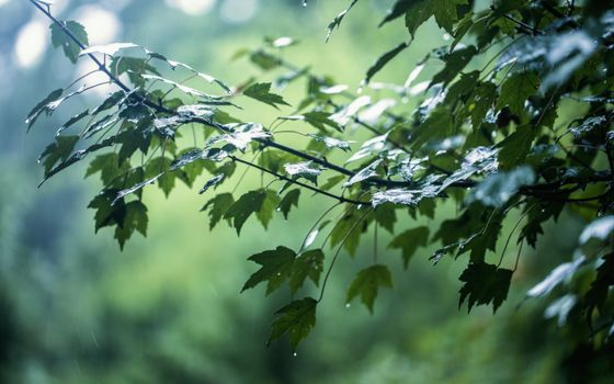 Photo free Leaves, branch, after rain