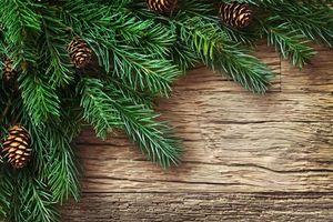 Бесплатные фото Рождество, фон, дизайн, элементы, новогодние обои, новый год, ветки