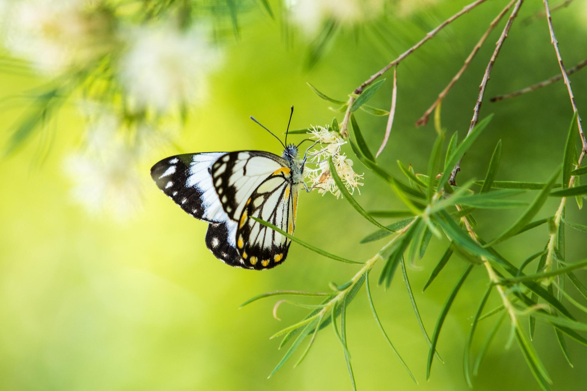 Обои ветка, бабочка, насекомые