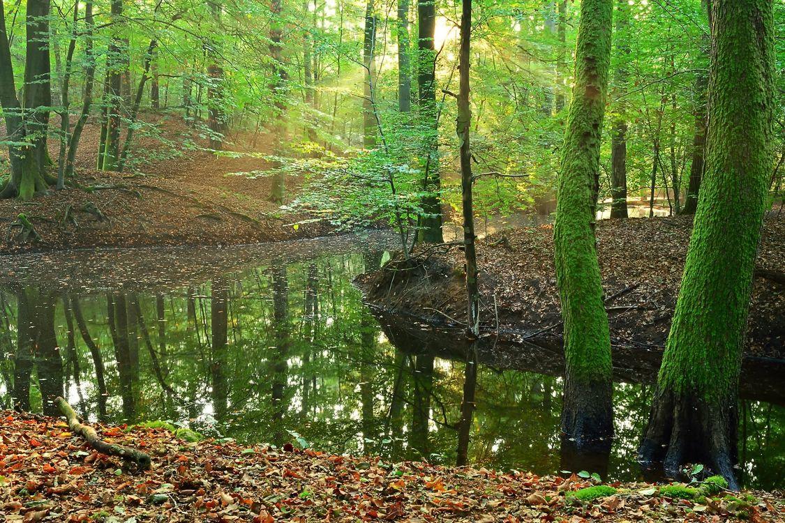 Скачать лес, водоём фото с сайта fonwall