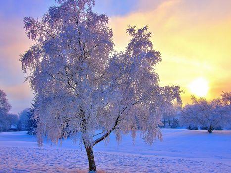 Фото бесплатно пейзаж, зима, заснеженное дерево