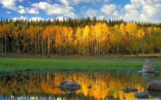 Фото бесплатно озеро, отражение, камни, трава, лес, деревья, небо, облака