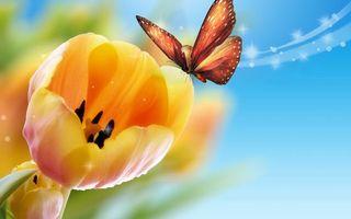 Бесплатные фото рисунок,цветок,лепестки,бабочка,крылья,узор