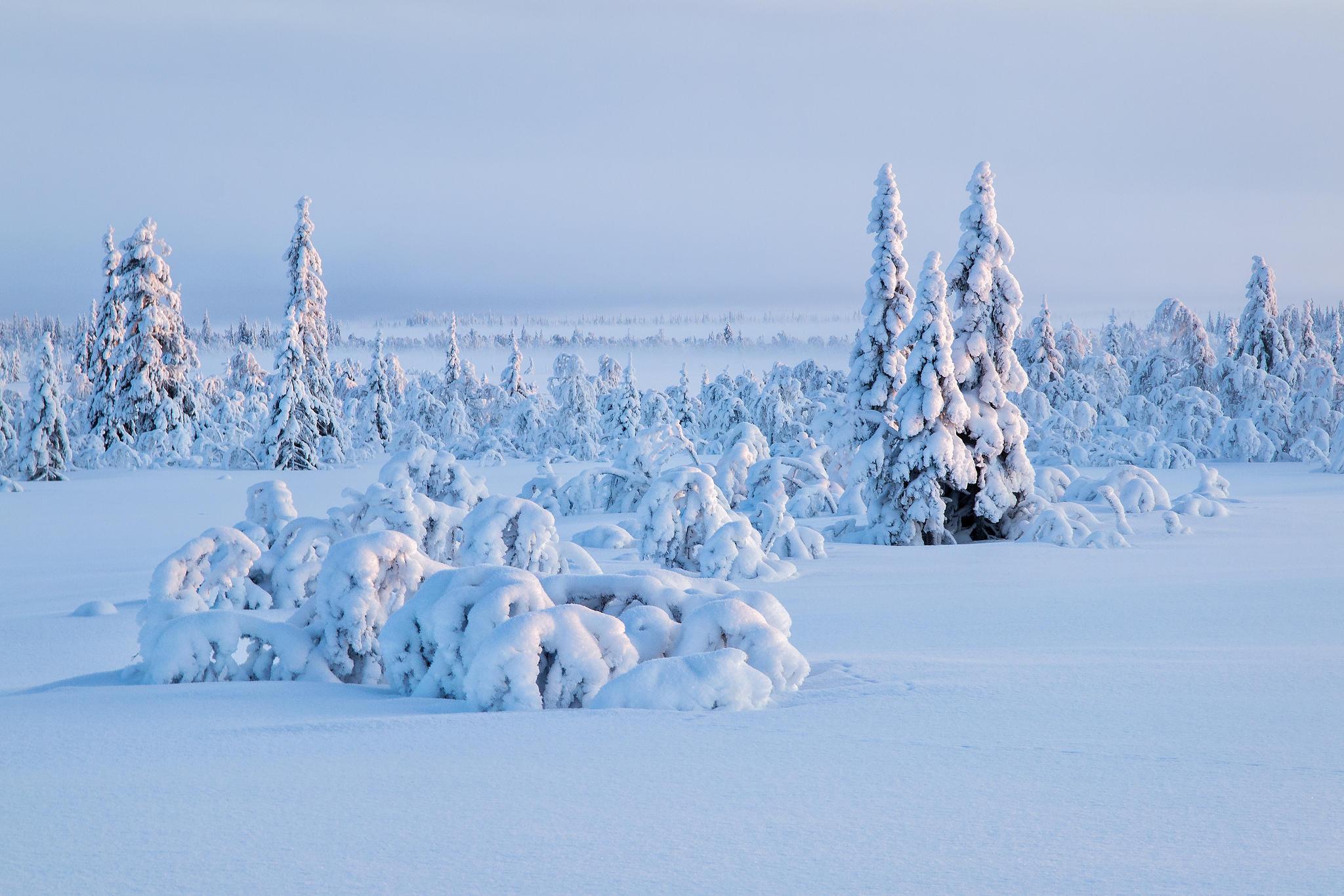 обои зима снежная на рабочий стол № 640837 бесплатно