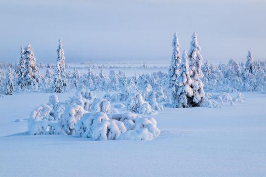 Photo free snowdrifts, a lot of snow, snow