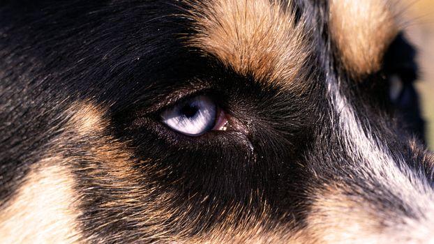 Заставки Хаски, взгляд, собака