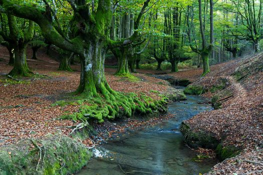 Фото бесплатно Испания, речка, деревья