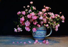 Фото бесплатно флора, ВАЗа, натюрморт