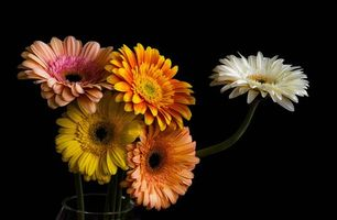 Фото бесплатно герберы, цветы, букет