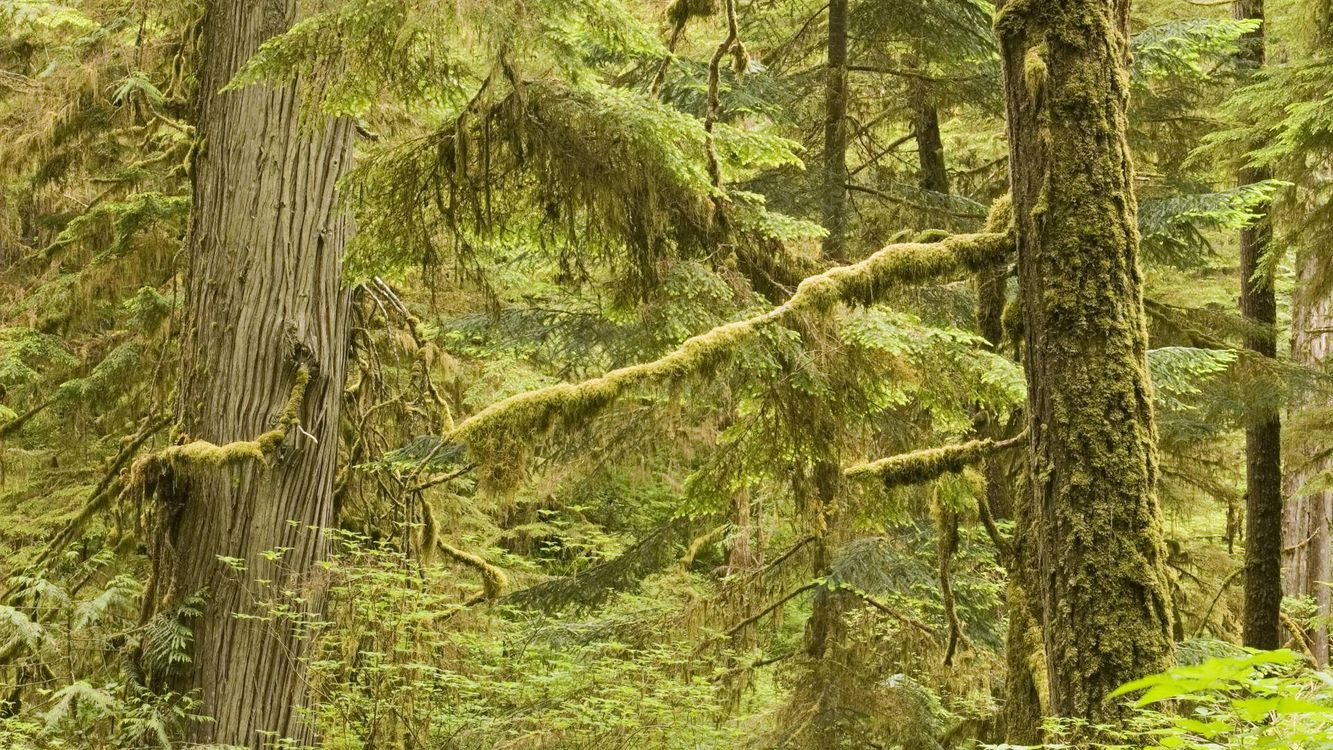Photos for free summer, moss, trunks - to the desktop
