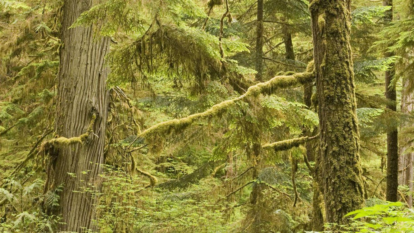 Free photo summer, moss, trunks - to desktop