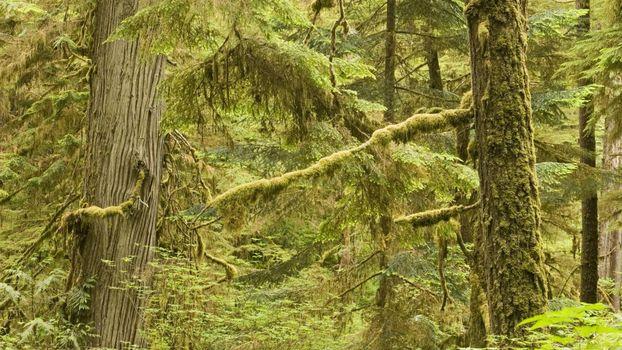 Photo free summer, moss, trunks