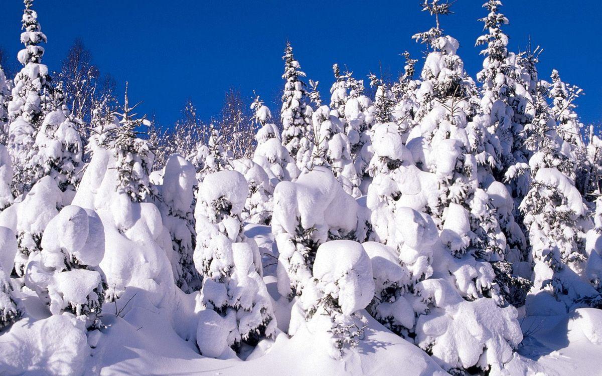 Фото бесплатно зима, деревья, снег, сугробы, мороз, иней, природа - скачать на рабочий стол