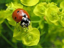 Бесплатные фото божья коровка,красная,лапки,растения,зеленое,листья