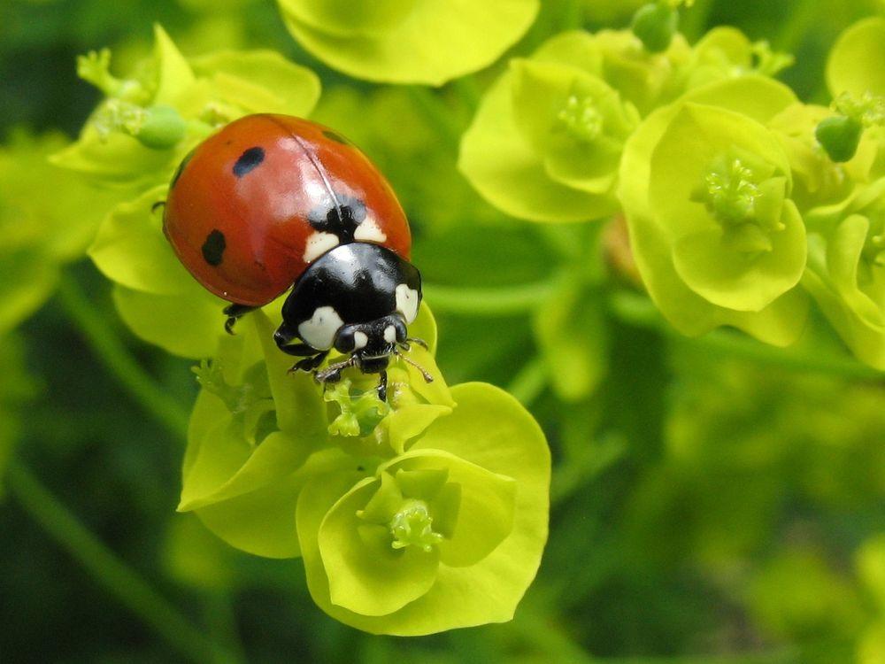 Фото бесплатно растения, зеленый, красный - на рабочий стол