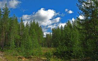 Бесплатные фото лето,лес,деревья,трава,небо,облака