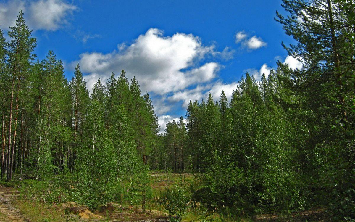 Фото бесплатно лето, лес, деревья, трава, небо, облака, природа - скачать на рабочий стол