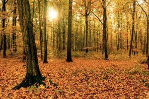 Бесплатные фото осень,лес,деревья,природа
