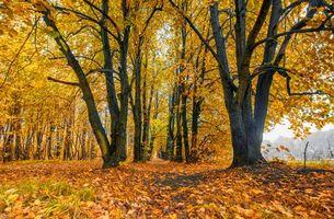 Бесплатные фото осень,лес,парк,тропинка,деревья,пейзаж