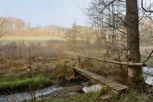 Бесплатные фото речка,ручей,лес,деревья,мост,поле,туман