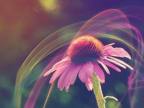 Фото бесплатно абстракция, цветок, флора