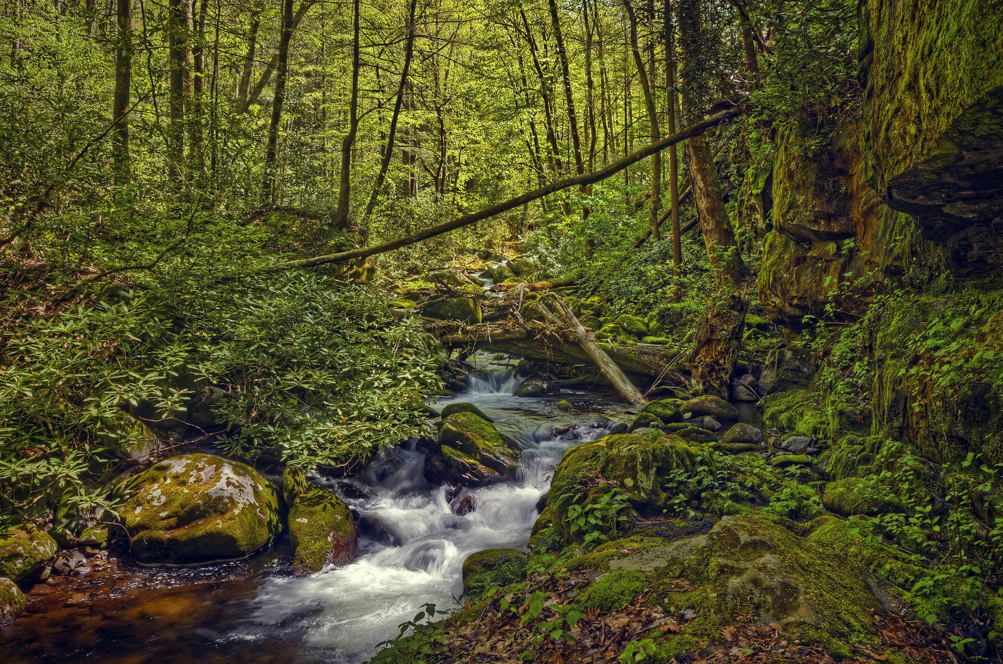 обои Great Smoky Mountains National Park, штат Теннесси, лес, деревья картинки фото