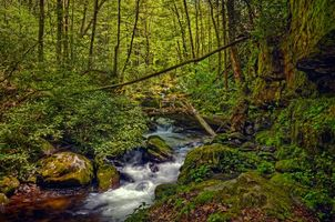 Бесплатные фото Great Smoky Mountains National Park,штат Теннесси,лес,деревья,речка,камни,природа