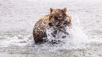 Бесплатные фото медведь,морда,шерсть,река,брызги,капли