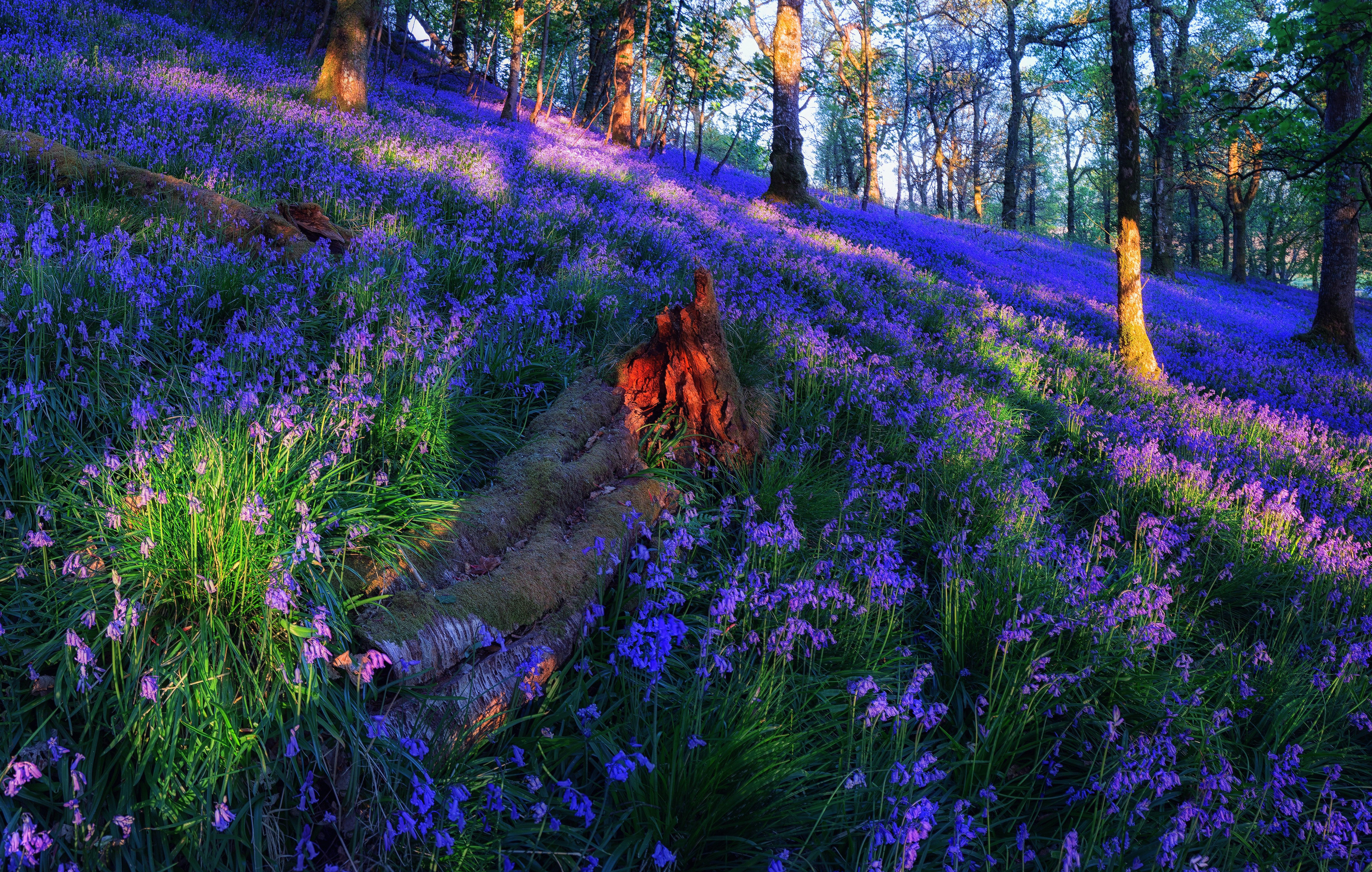 затраты, которые лес цветы фото на рабочий стол делает