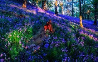 Бесплатные фото Trossachs,Шотландии,лес,деревья,косогор,цветы,природа