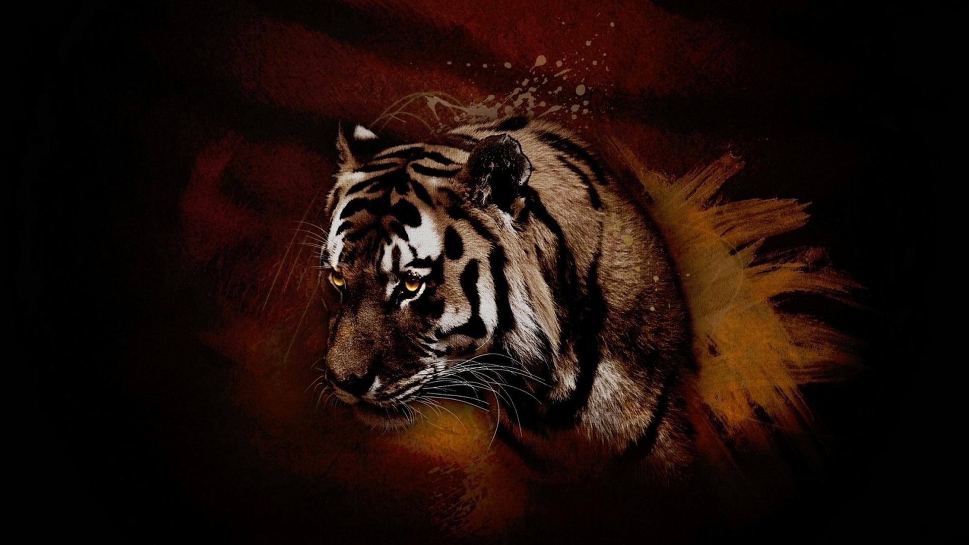 Обои кошка, тигр, хищник, полосатый