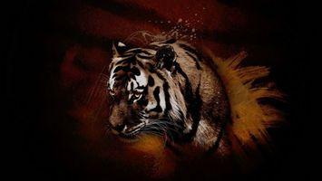 Фото бесплатно кошка, тигр, хищник