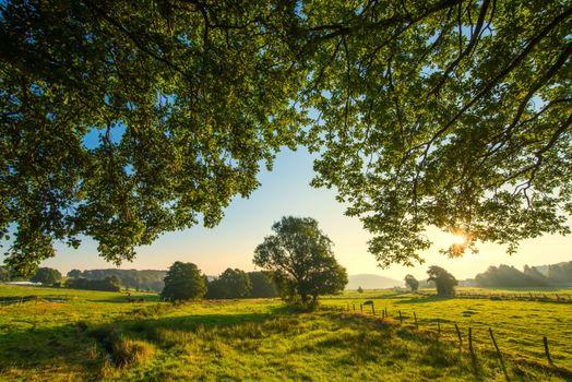 Photo free field, trees, pasture