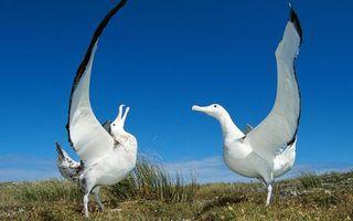 Фото бесплатно птицы, танец, клювы
