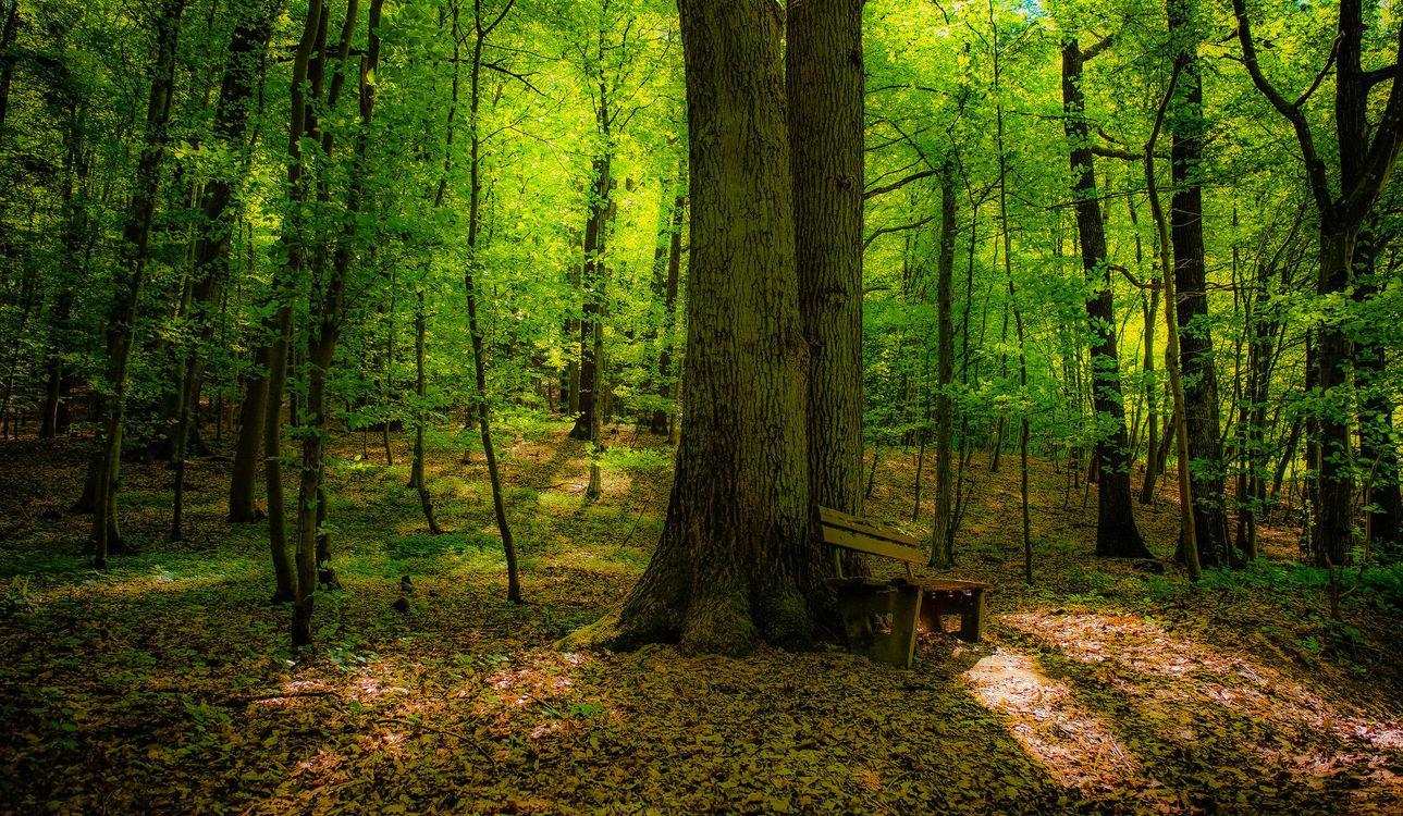 Фото бесплатно лес, деревья, лавочка, природа, природа - скачать на рабочий стол